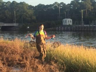Trapping killifish at the Florida State University Coastal and Marine Laboratory in St. Teresa, Florida.